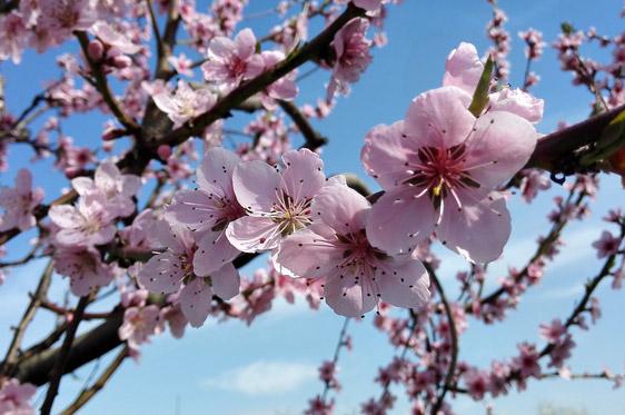 Offerta di Primavera