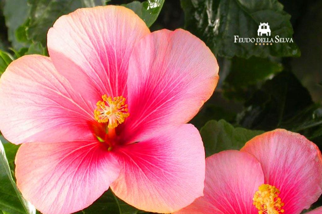 Matrimonio a tema: Paradise found