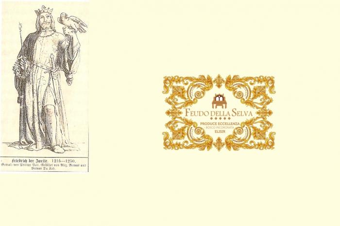 Federico II e le domus solaciorum
