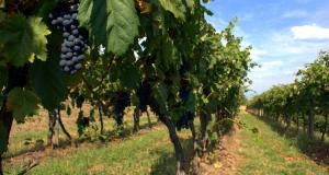 Le vin et la gastronomie dans les Abruzzes