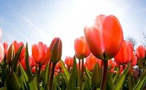 Offerta Ponti di Primavera